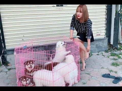Xin lỗi. Em chỉ là con bán chó dạo -  Mật Pet Family - Thời lượng: 10 phút.