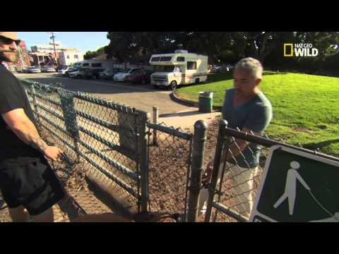 Video Cesar 911 -