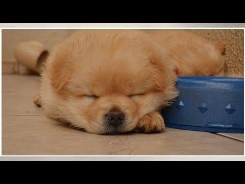 Imagenes para enamorar - Las patitas más adorables de la red; cachorro enamora a miles