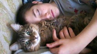 Nonton Kids Love Cats  Film Subtitle Indonesia Streaming Movie Download