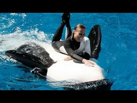 SeaWorld Trainers in the Water with Killer Whales!!!
