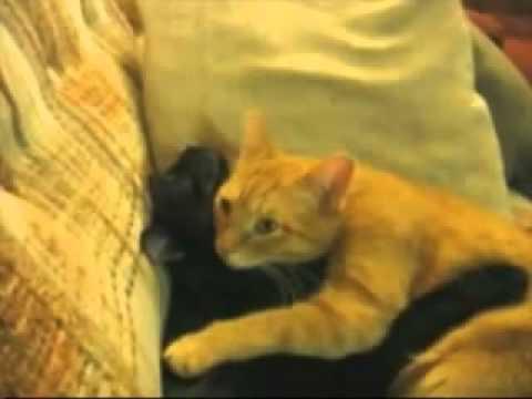 Коты видео очень смешные