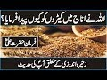 According To Hazrat Ali R A Why Allah Created Insects In Cereal In Urdu Hindi