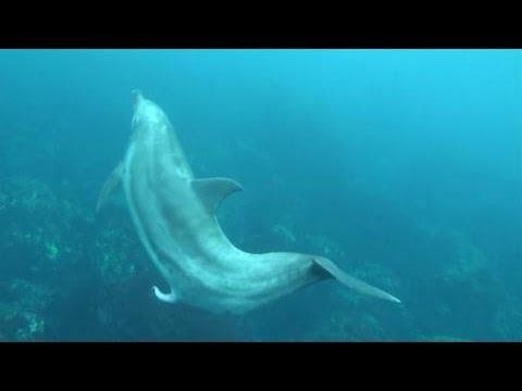 首度捕捉「海豚夢遺」畫面 在海裡漂著漂著就…