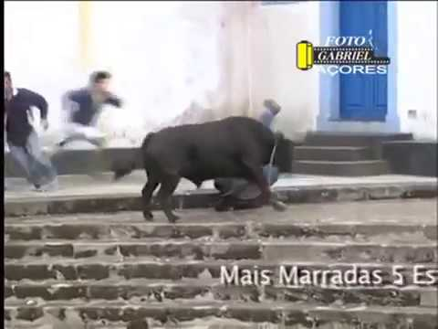 Những pha đấu bò hài hước