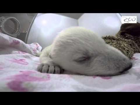 Polar Bear Dreams ^^
