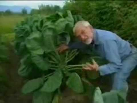 vegetables - When you maximize the soil potential, you maximize the plant potential. - 46 lb celery - 18 lb carrots - 35 lb cabbage - 60 lb swiss chard - 35 lb zucchini -...