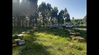 Apicultura en Argentina - Pautas para el manejo de las colmenas en invierno