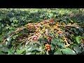 Download Lagu KEBUN KOPI B5 PONDOK BARU BENER MERIAH Mp3 Free