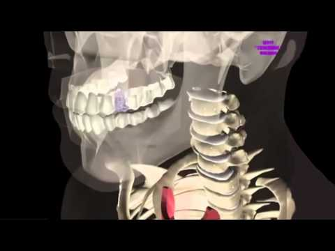 possiamo far ricrescere e rigenerare i nostri denti!