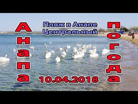 Анапа. Погода. 10.04.2018. Лебеди Центральном пляже