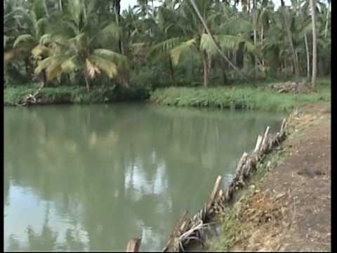 Kerala Research Fish Farm (VinSaj Ltd)