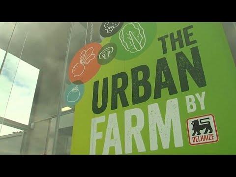 Obst & Gemüse vom Dach: Belgiens neues Supermarkt-Kon ...