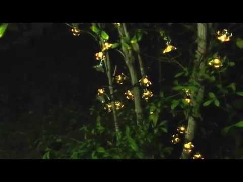 , title : 'Deckey Solar 100 Led Flower Lights'