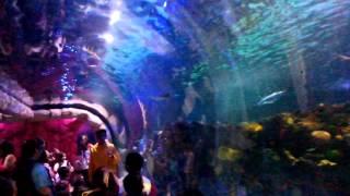 12 Nov 2015 ... Pingüinos & Tiburones en la ciudad - Acuario Inbursa!! - Duration: 4:46. Todo Por nDescubrir 3,753 views · 4:46. Acuario Inbursa, una opción...