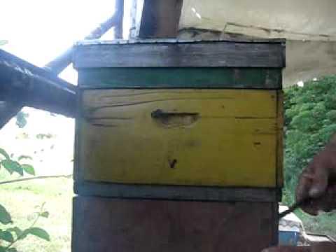 монофлерный мед,подсолнух .flv (видео)