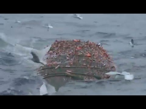 คลิปเรืออวนลาก จับปลาได้แต่ละครั้ง มันมากมายจริงๆ