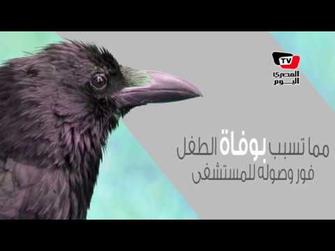 غراب ينهي حياة رضيع عمره ٧ أيام بالإسكندرية