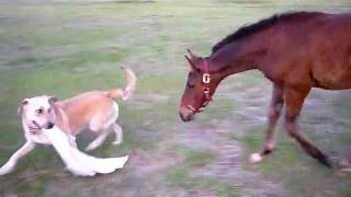 Baby Horse & Dog Play Tag!