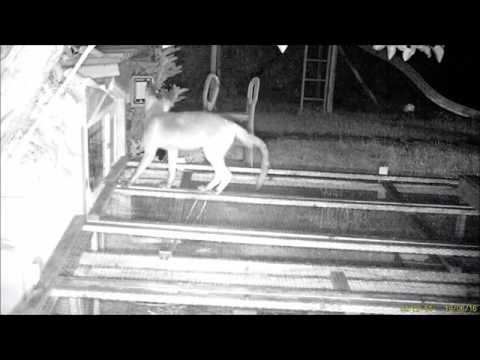 Freizeit 4.0 Fuchs auf dem Kaninchenstall