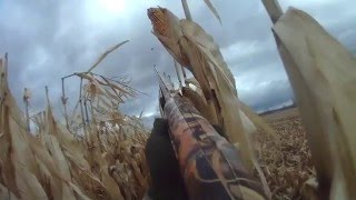 Goose Hunt 2015 - Ottawa Valley