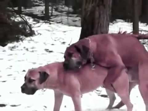 Top  Best Animal Sex Videos Compilation