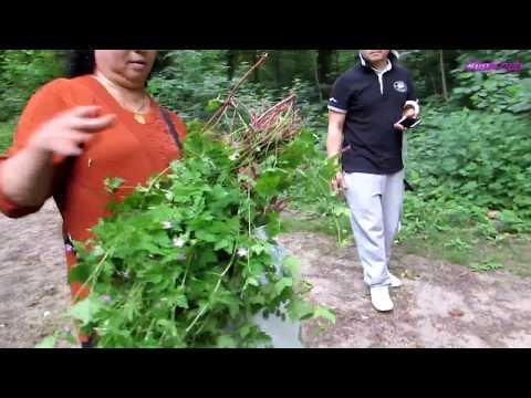hmoob mus de tshuaj ntsuaj  geraniun heibe a rebet zoo 66 yam mob (видео)