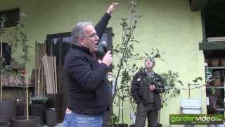 #219 The most important pruning rules for apple trees