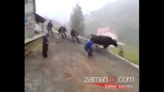 Rize Turkey  city photos : THREE PEOPLE MISSED the sacrificial bulls in Rize/TURKEY !!!!