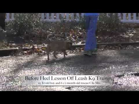 Heel lesson before and after – 10 yr old boy and 6 month old rescue Chihuahua