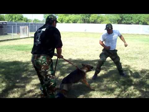 Entrenamiento canino Monterrey Perros de proteccion