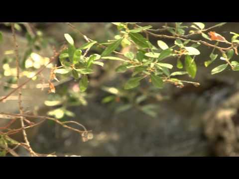 Gorge du ruisseau Marin, Archidona
