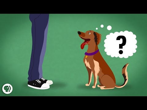Can a Dog Understand the Human Language