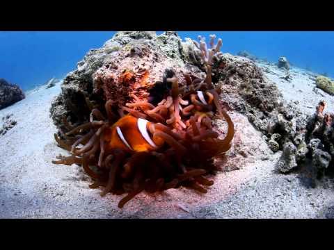 اسماك شعاب البحر الاحمر