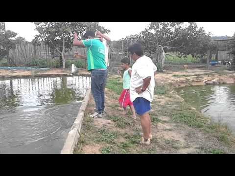 Agricultura Familiar em Tailandia Pará.