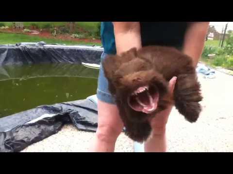 VIDEO: Nečekaná psí láska k foukači na listí
