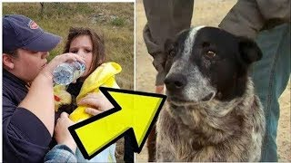 Blind Dog Leads Police To A Truly Alarming Sight That Breaks The Case Wide Open by Did You Know Animals?