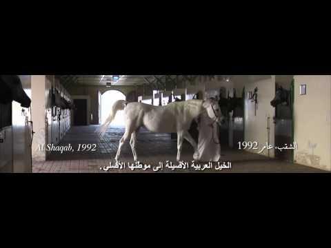 The Al Shaqab Film