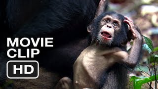 Nonton Chimpanzee Movie CLIP #1 (2012) - Meet Oscar's Extended Family - Disney Move HD Film Subtitle Indonesia Streaming Movie Download