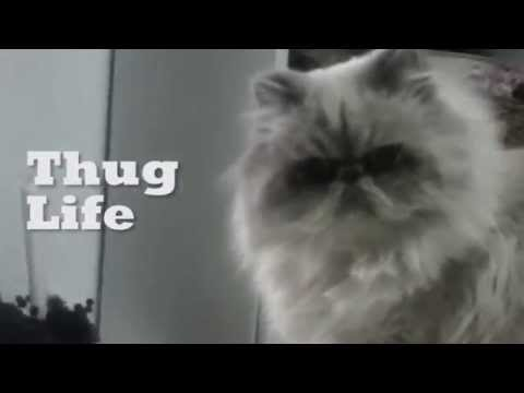 VIDEO: Cat Living Like A Rebel!
