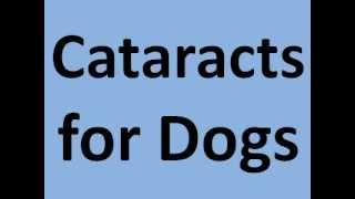Cataracts For Dogs - Cataracts For Dogs Eye Drops To Cure Cataracts For Dogs