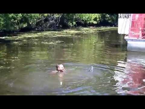entra in acqua con gli alligatori ma...