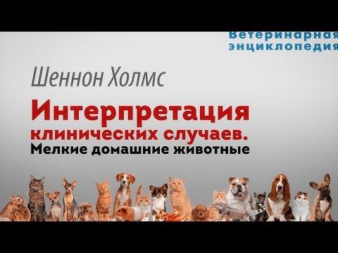 Интерпретация клинических случаев.  Рентген мелких домашних животных