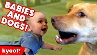 animale faze caini si copii