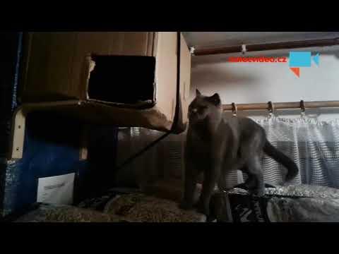 Výchovná kočičí facka