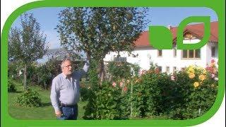 Gartenideen – der Apfelbaum und die Bohnenstange