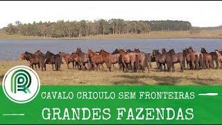 Video Grandes Fazendas Especial Freio de Ouro - Cabanha 5 Salsos MP3, 3GP, MP4, WEBM, AVI, FLV Oktober 2018
