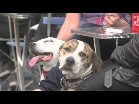 Dogs in the City - Deleted Scene: Joint Custody