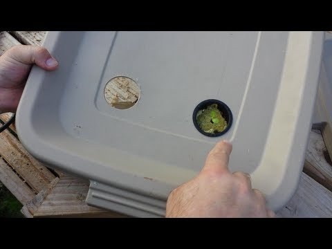 How to Build a Kratky Hydroponic Container