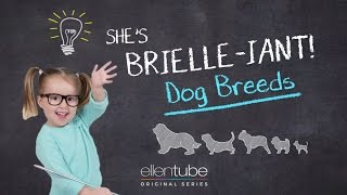 She's Brielle-iant, Dog Breeds